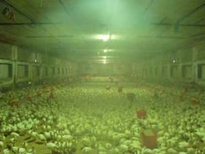 Системы туманообразования в сельском хозяйстве
