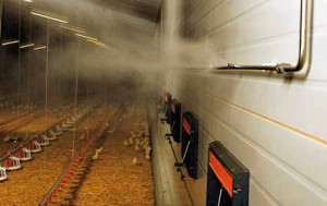 Использование искусственного тумана в птицеводстве