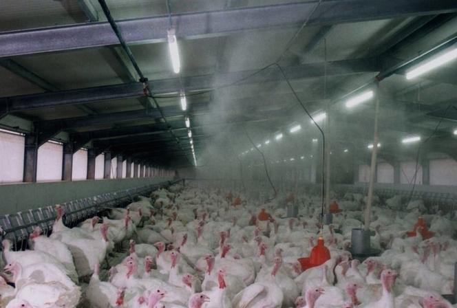 Туманообразующие системы в птицеводстве