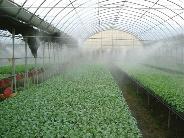 Система тумана в тепличном хозяйстве