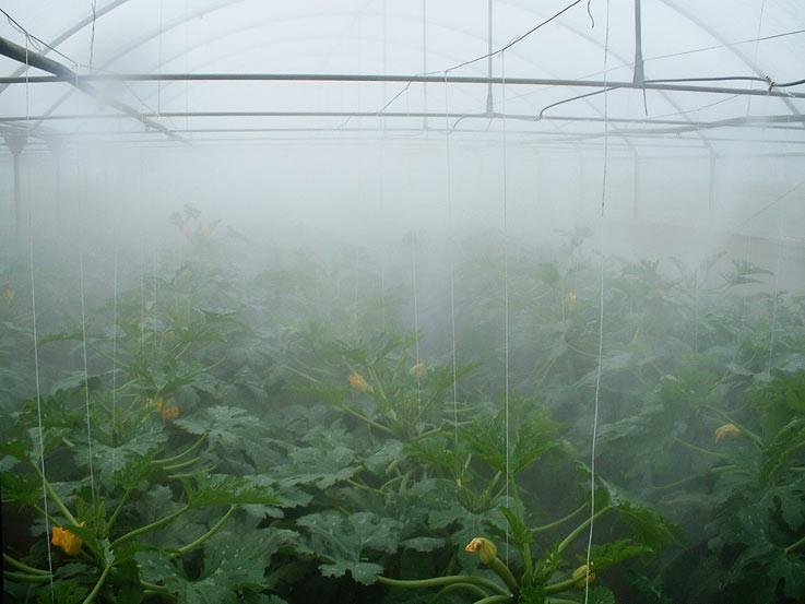Использование системы тумана в тепличных хозяйствах