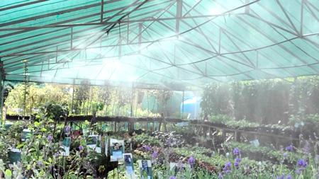 Внекорневое удобрение растений системой тумана