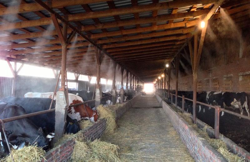 Использование систем туманообразования в свиноводстве