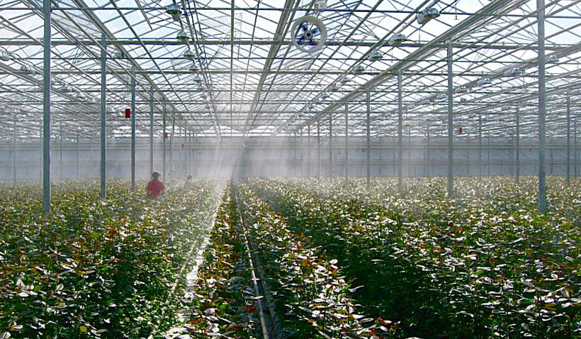 Системы туманообразования в теплицах