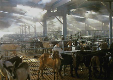 Система тумана на животноводческой ферме