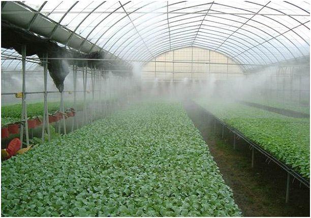 Увлажнение туманом в теплицах
