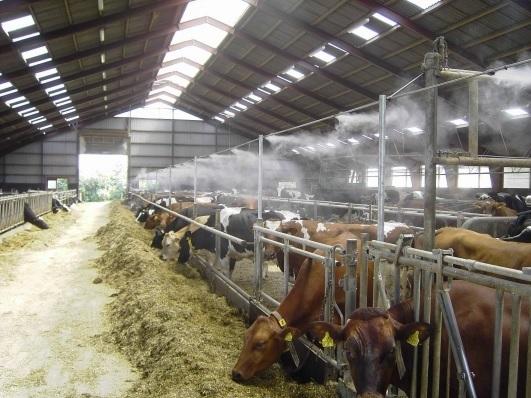 Система туманообразования в животноводстве