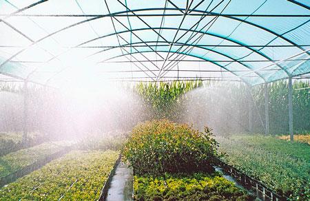 Системы искусственного тумана в теплицах и оранжереях